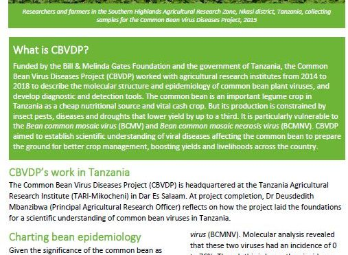Common Bean Virus Diseases Project impacts