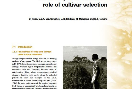 Improving long-term storage under tropical conditions: role of cultivar selection