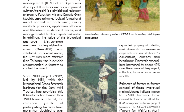 Impact of integrated crop management (ICM) on chickpea production in Nepal