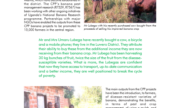 Impact of improved IPM practices for banana diseases and pests in Uganda