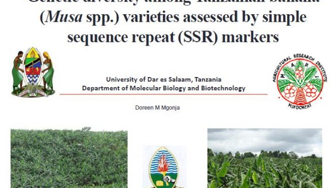 Genetic diversity among Tanzanian banana (<em>Musa</em> spp.) varieties assessed by simple sequence repeat (SSR) markers