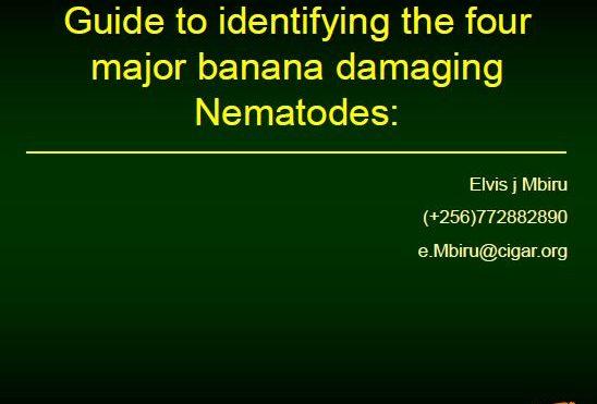 Guide to identifying the four major banana-damaging nematodes