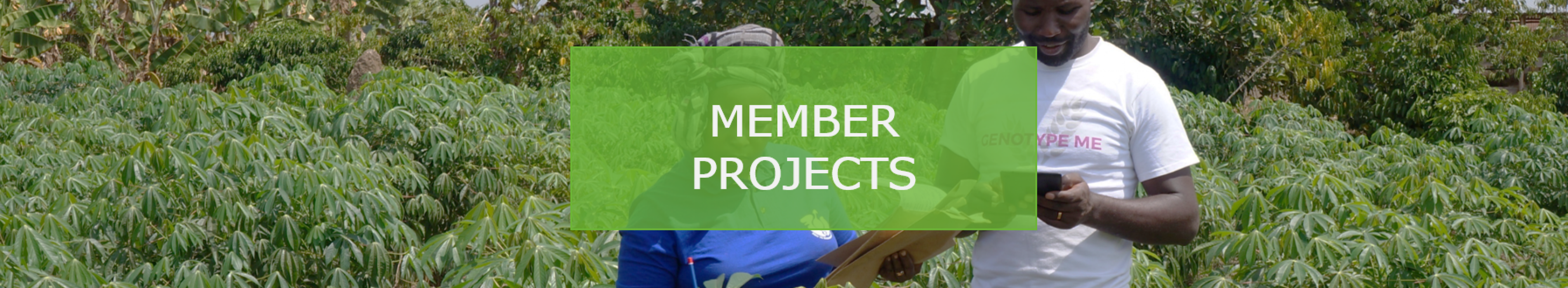 Member projects